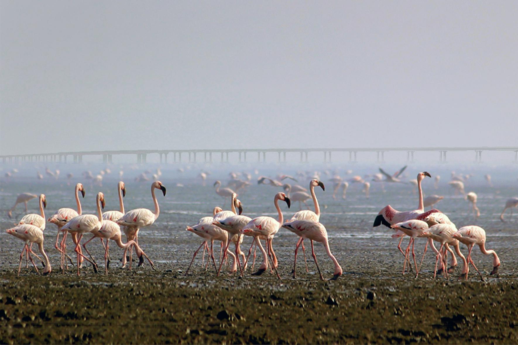 Mumbai Trans-Harbour Link